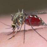 8 Mosquito Bite Facts and Myths