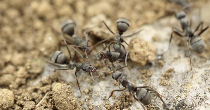 Bug protection (image)