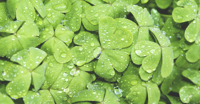St. Patrick's Day: Why is the holiday so green?