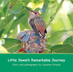 Little Jewel's Remarkable Journey