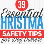 Tips to Ensure Safety of your Pets during Christmas [Infographic]