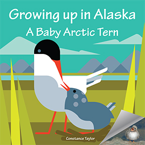 Growing up in Alaska: A Baby Arctic Tern covid free