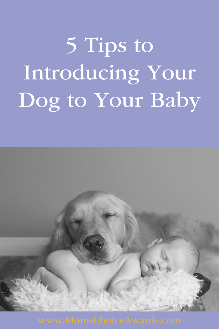 introduce baby to dog tips