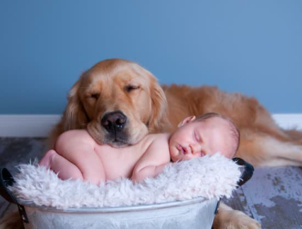 5 Tips to Introducing Your Dog to Your Baby